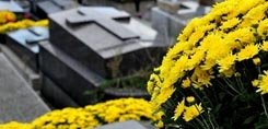 Chrysanthèmes de Toussaint