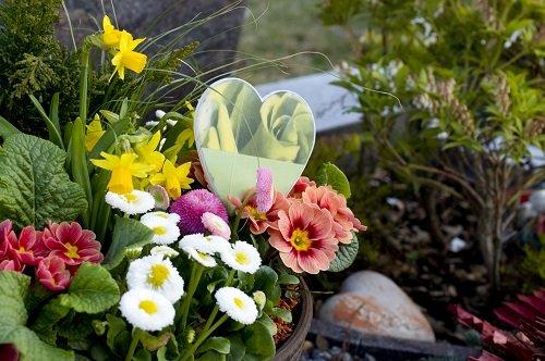 fleurs-naturelles-toussaint